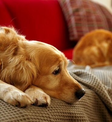 help your dog cope with the stress of divorce