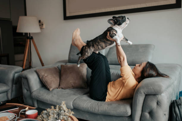 pets are more than property in divorce