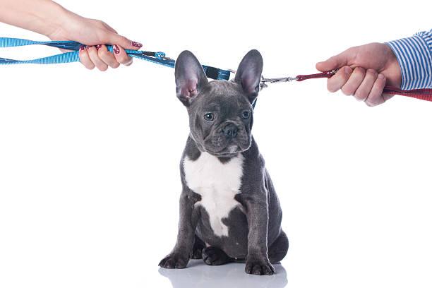 pet custody during divorce dog cat