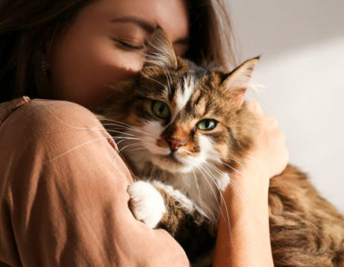 pet custody during divorce